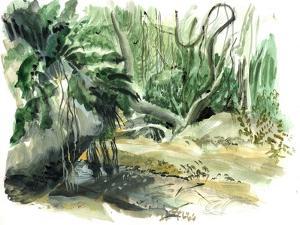 Tyrona, Jungle by Mary Kuper