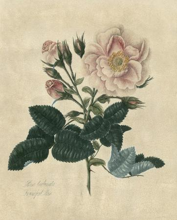 Embellished Frankfort Rose