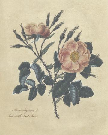 Embellished Sweet Briar Rose