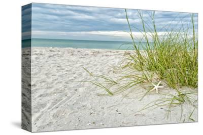 Star Fish and Sea Oats by Mary Lou Johnson