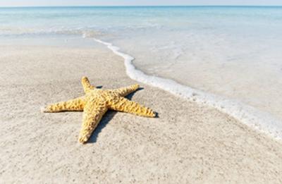 Star Fish Line of Surf