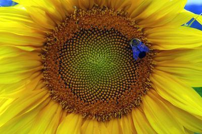 Blue Bee by Mary Woodman