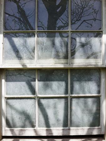 Window Reflection by Mary Woodman