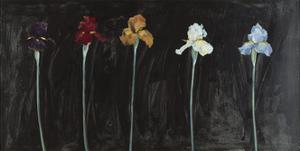 Midnight Irises by Marysia Burr