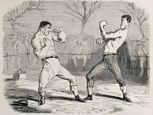 Antique Humorous Illustration Of A Boxing Match Beginning by marzolino