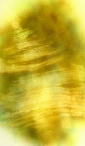 Nirvana: The Dandelion Felt the Existence of the Wind by Masaho Miyashima