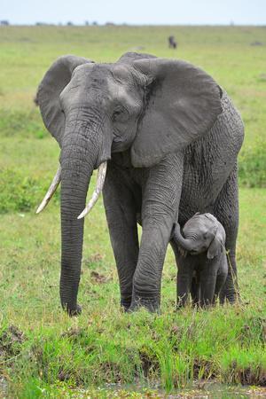 https://imgc.artprintimages.com/img/print/masai-mara-elephant_u-l-q13062m0.jpg?p=0