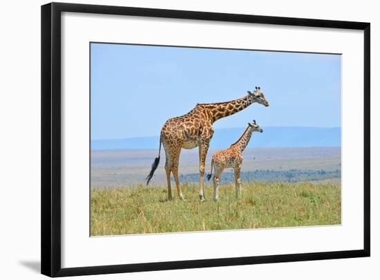 Masai Mara Giraffe-Jim Varley Photography-Framed Photographic Print