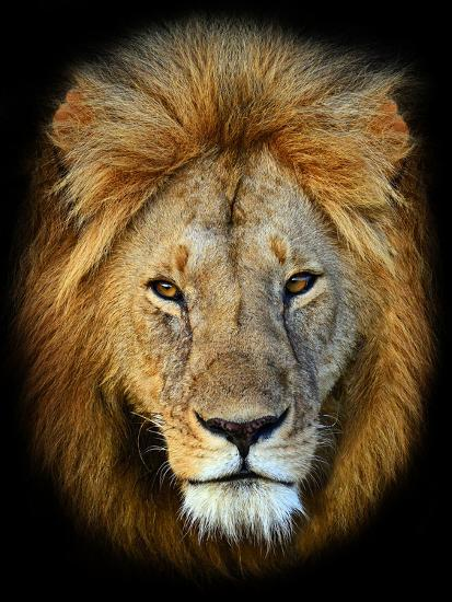 Masai Mara Lions-Kyslynskyy-Photographic Print