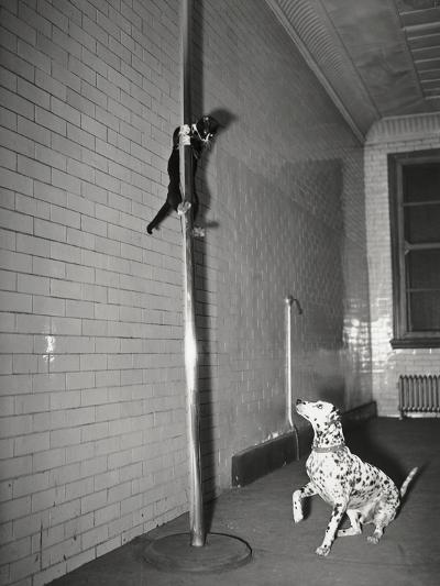 Mascot Slides down Pole to Dalmation--Photographic Print