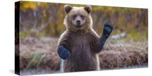 The brown bear welcomes, waves a paw by Masha Rasputina