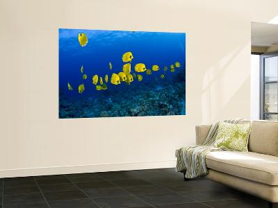Masked Butterfly Fish-Mark Webster-Wall Mural