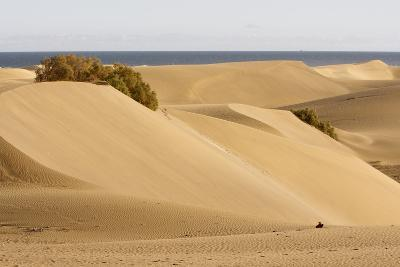 Maspalomas Sand Dunes, Gran Canaria, Canary Islands, Spain-Peter Thompson-Photographic Print