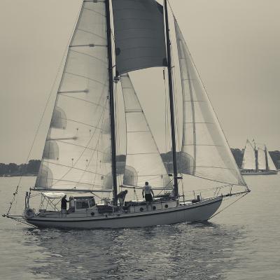Massachusetts, Gloucester, Schooner Festival, Sail Boats-Walter Bibikow-Photographic Print