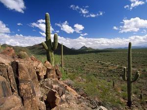 Landscape, Saguaro National Park, Arizona, USA by Massimo Borchi
