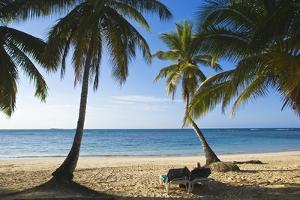 Palm Trees on Beach, Las Terrenas, Samana Peninsula, Dominican Republic by Massimo Borchi