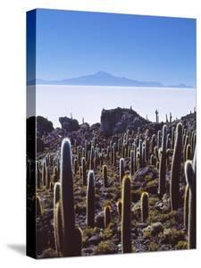 Salar De Uyuni and Cactuses in Isla De Pescado, Bolivia by Massimo Borchi