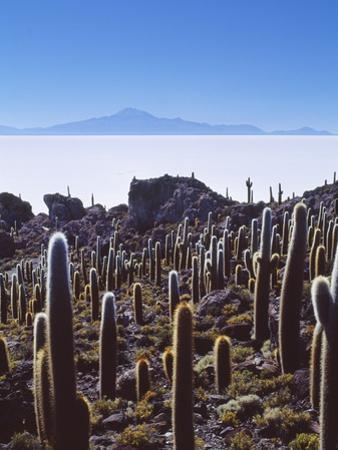Salar De Uyuni and Cactuses in Isla De Pescado, Bolivia