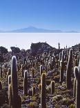 Salar De Uyuni and Cactuses in Isla De Pescado, Bolivia-Massimo Borchi-Photographic Print