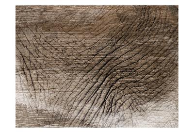 https://imgc.artprintimages.com/img/print/mastadon-tapestry-1_u-l-f9a6jo0.jpg?p=0