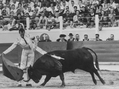 Matador Luis Miguel Dominguin During Bullfight-James Burke-Premium Photographic Print