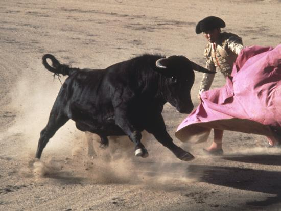 Matador with Pink Cape and Bull, Mexico-Edward Slater-Photographic Print