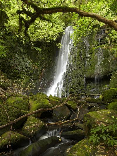Matai Falls, Catlins, South Otago, South Island, New Zealand-David Wall-Photographic Print