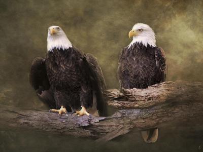 Mates Bald Eagle Pair-Jai Johnson-Giclee Print