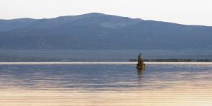 Bird On A Lake 2 by Matias Jason