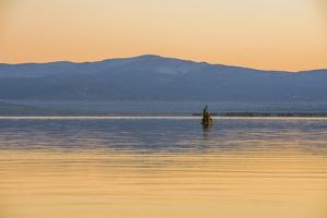 Bird On The Lake by Matias Jason