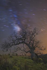 Lonesome Tree by Matias Jason