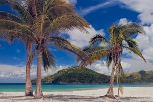 Palm Trees by Matias Jason