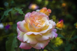 Peace Flower by Matias Jason