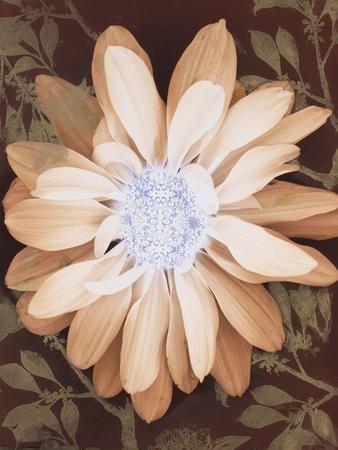 Velvet Daisy 1