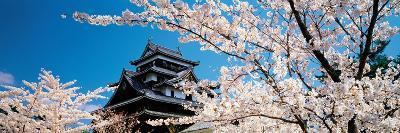 Matsue Castle Cherry Blossoms Shimane Japan--Photographic Print