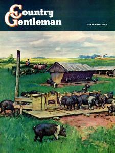 """Pigs Feeding,"" Country Gentleman Cover, September 1, 1946 by Matt Clark"