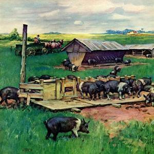 """Pigs Feeding,""September 1, 1946 by Matt Clark"