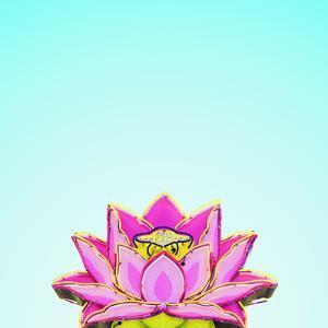 Lotus by Matt Crump