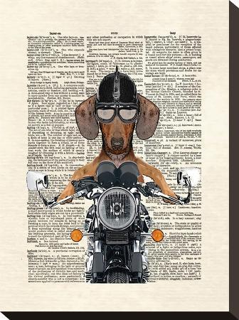 matt-dinniman-doxie-motorcycle