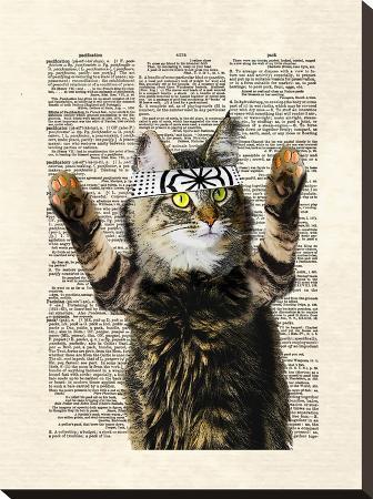 matt-dinniman-karate-kitty