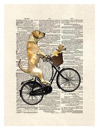 Labrador Bike