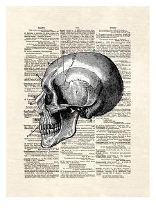 Skull by Matt Dinniman