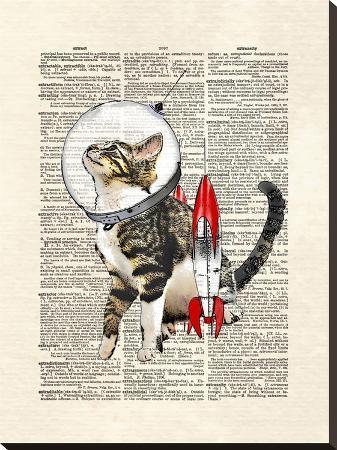 matt-dinniman-space-cat