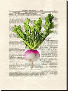 Turnip by Matt Dinniman