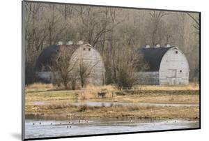 Washington State. Two Barns, at the Nisqually Wildlife Refuge by Matt Freedman