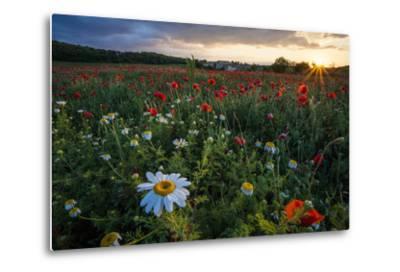 A Field of Flowers in Monteriggioni