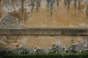 Pink Flowers Growing on an Old Wall in Florence's Boboli Garden by Matt Propert