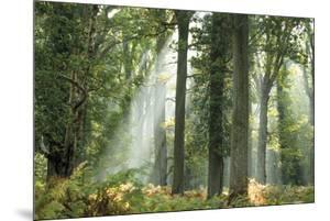 Woodland Rays by Matt Roseveare