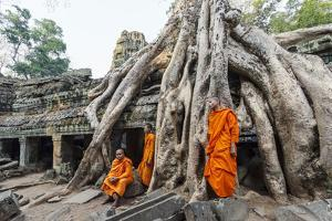 Cambodia, Siem Reap, Angkor Wat Complex. Monks Inside Ta Prohm Temple (Mr) by Matteo Colombo