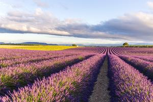 France, Provence Alps Cote D'Azur, Haute Provence by Matteo Colombo